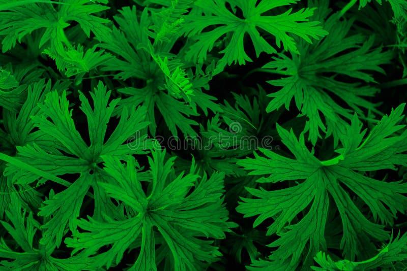 Saftig grön ormbunke arkivbilder