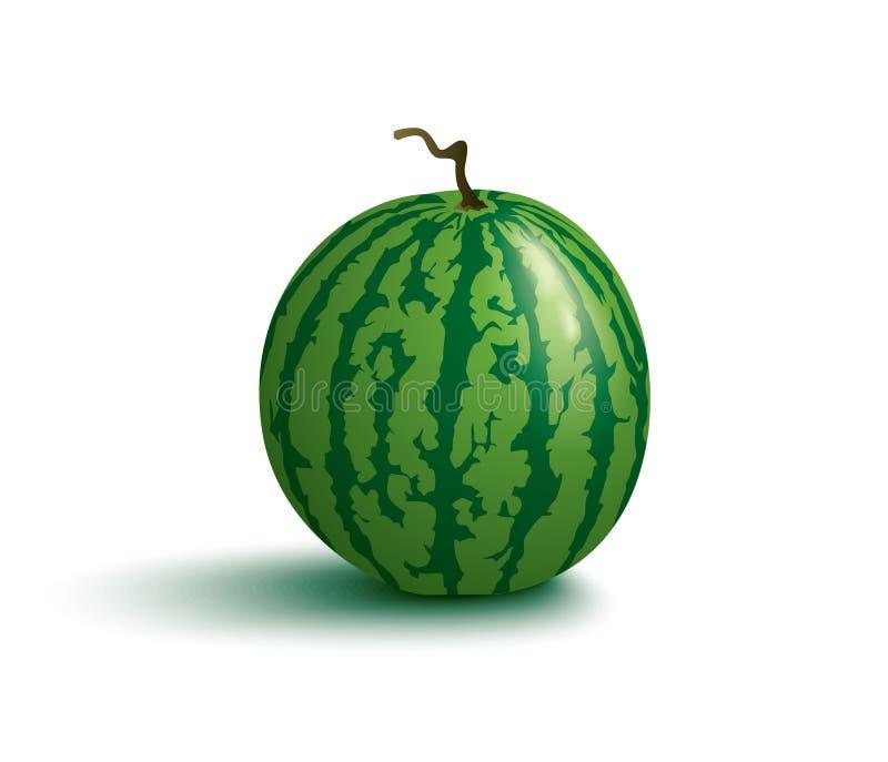 saftig vattenmelon vektor illustrationer