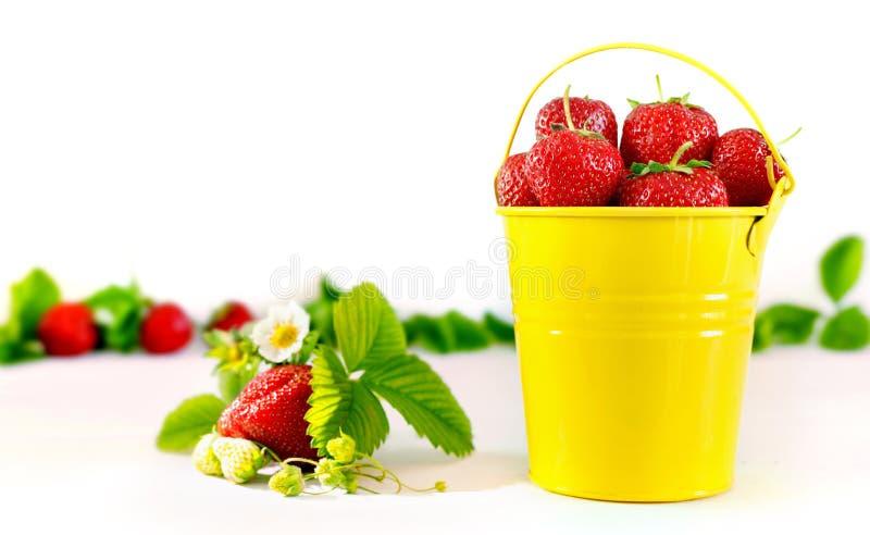 Saftiga mogna smakliga jordgubbar i hink f?r gul metall p? den vita tr?tabellen royaltyfria foton