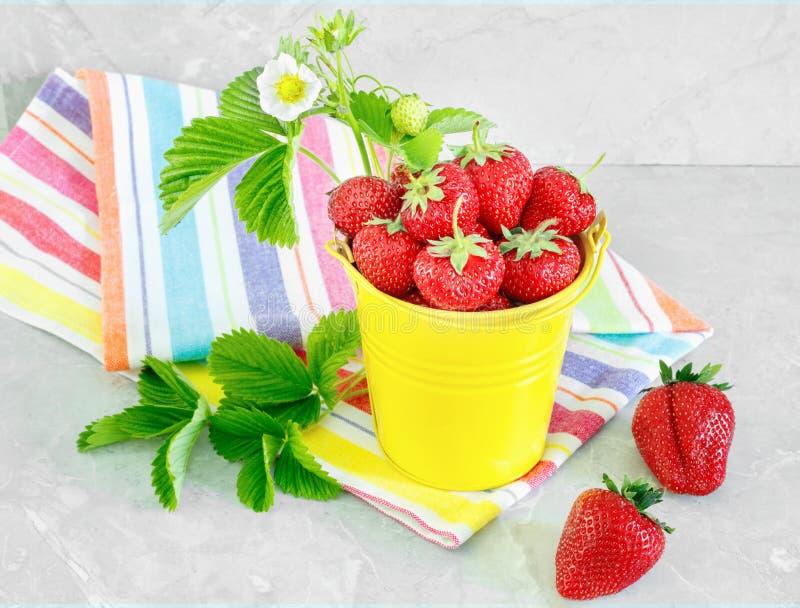 Saftiga mogna smakliga jordgubbar i hink f?r gul metall med den randiga handduken p? stencountertop royaltyfri foto