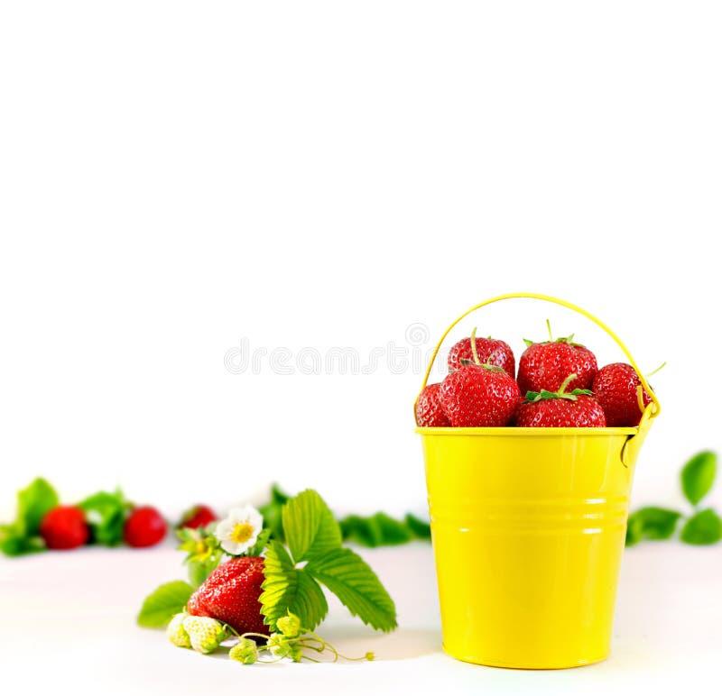 Saftiga mogna smakliga jordgubbar i hink f?r gul metall p? den vita tr?tabellen arkivbilder