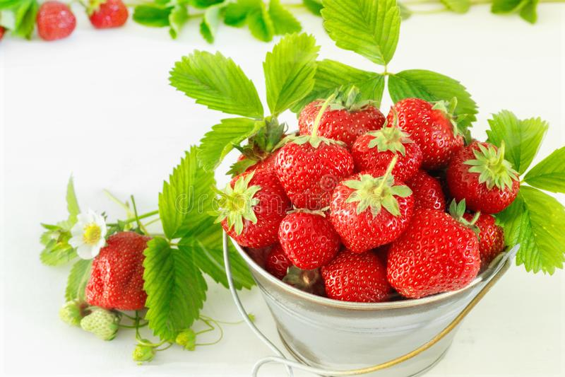 Saftiga mogna smakliga jordgubbar i metallhink p? den vita tr?tabellen royaltyfria foton