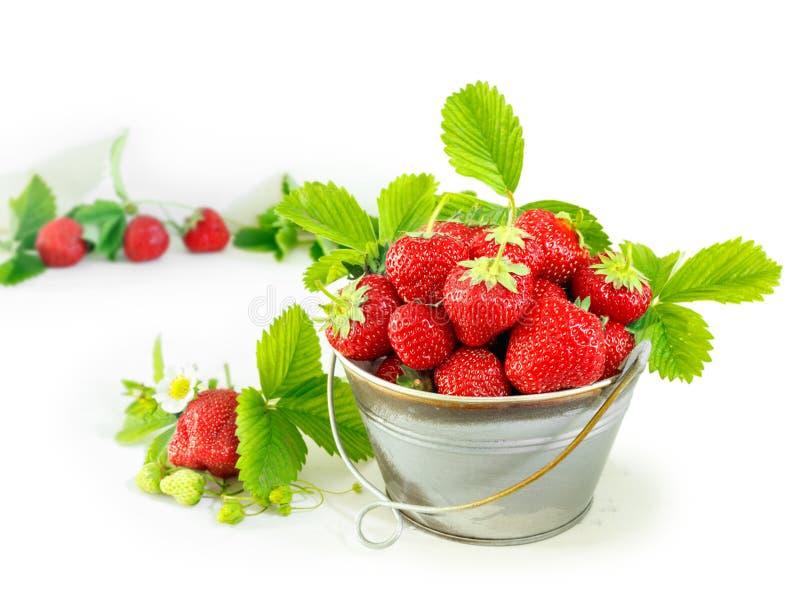 Saftiga mogna smakliga jordgubbar i metallhink p? den vita tr?tabellen royaltyfria bilder