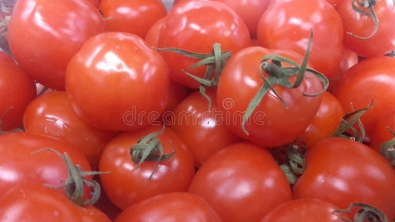 Saftiga och mogna tomater fotografering för bildbyråer