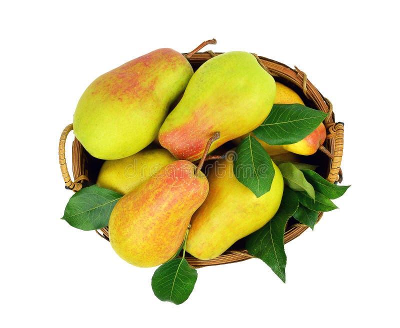 Saftiga päron i en korg isolerat utan en skugga Top beskådar royaltyfri fotografi