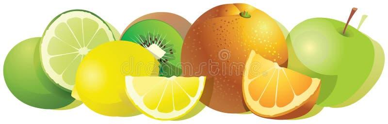 Saftiga vektorcitrusfrukter som isoleras på en vit bakgrund royaltyfri illustrationer