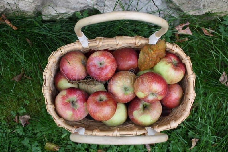 Saftige, reife Äpfel im Korb auf Hintergrund des grünen Grases lizenzfreie stockbilder