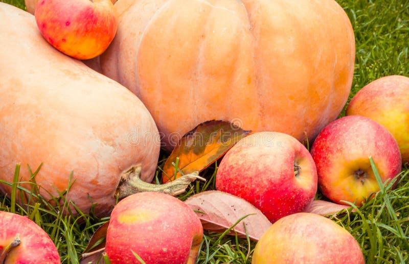 Saftige rote Äpfel und reifer orange Kürbis für Halloween stockfotos
