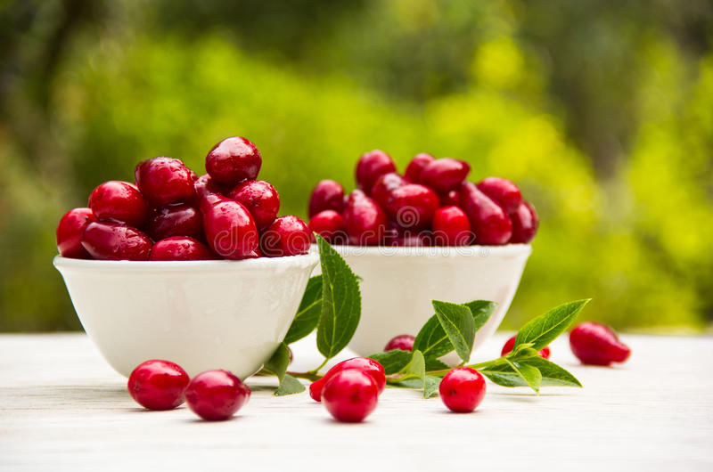 Saftige rote Beeren in den weißen Schüsseln Organische Früchte und Beeren Frische Hartriegelbeeren lizenzfreie stockfotos