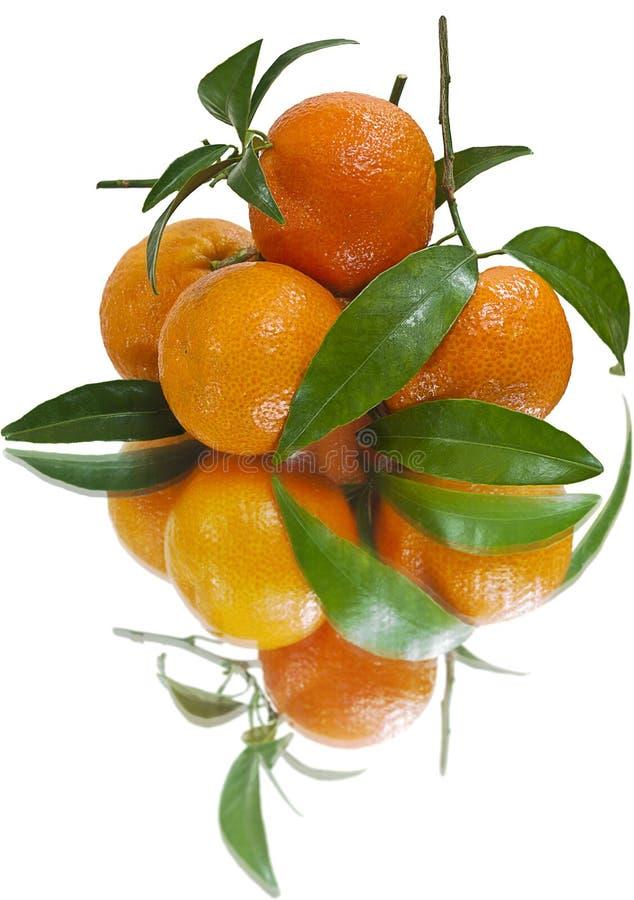 Saftige Tangerinen (getrennt) stockbild