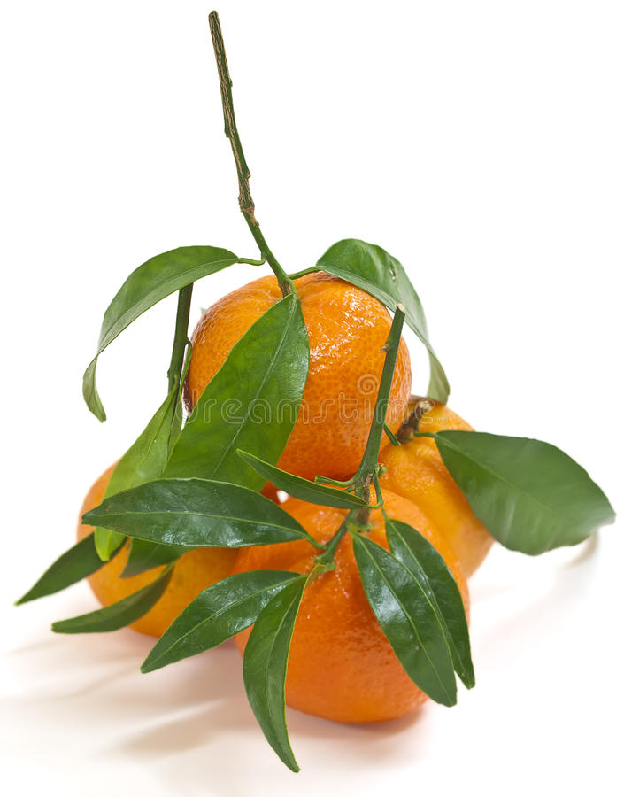 Saftige Tangerinen (getrennt) stockfotografie