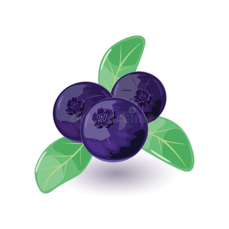 Saftigt och nytt blåbär med gröna sidor Sött blått eller purpurfärgat kulört blåbär stock illustrationer