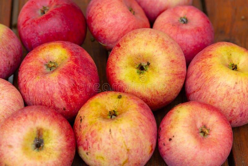 Saftigt och stort rött - gula äpplen på tabellen fotografering för bildbyråer