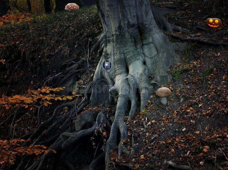 Saga med älvahuset och pumpa i skogen royaltyfri foto