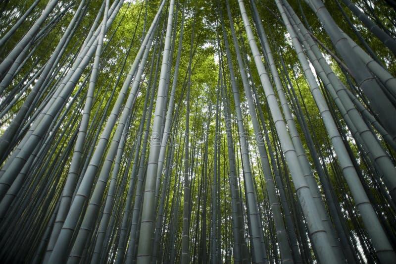 Sagano Bambus-Wald stockfotografie
