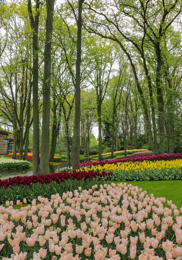 Sagaskogträdgård med strömmen och färgrika tulpan arkivfoton
