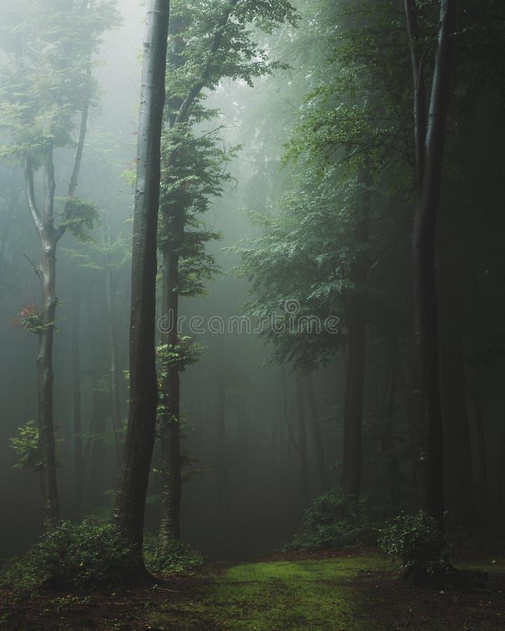 Sagaslinga i spöklikt landskap för dimmig skogfantasi i skogsmark royaltyfria foton