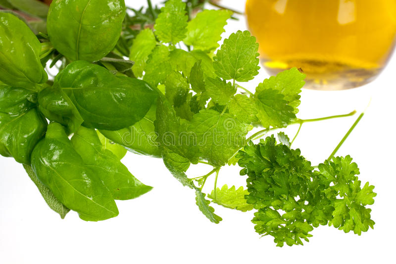 Download Sage,Basil,Parsley And Mint,isolated On White Stock Image - Image: 10926871