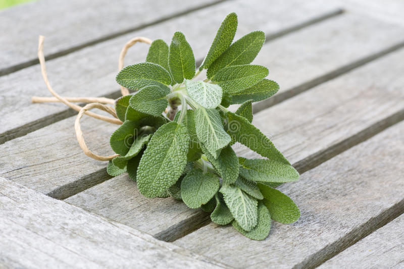 Download Sage of bundle close-up stock photo. Image of garden - 19175406