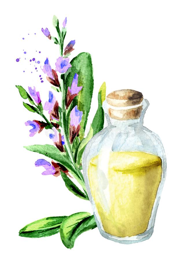 Sage essential oil. Watercolor hand drawn illustration isolated on white background. Sage essential oil. Watercolor hand drawn illustration isolated on white vector illustration