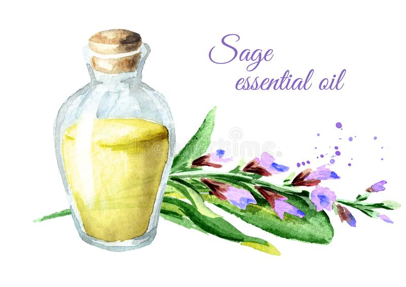 Sage essential oil. Watercolor hand drawn illustration, isolated on white background. Sage essential oil. Watercolor hand drawn illustration, isolated on white royalty free illustration