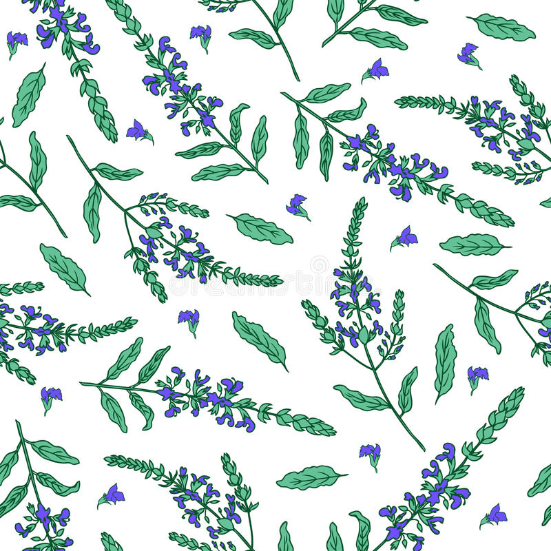 Sage flower hand drawn vector ink color sketch isolated on white, Doodle Healing plant, Vector seamless pattern, graphic royalty free illustration