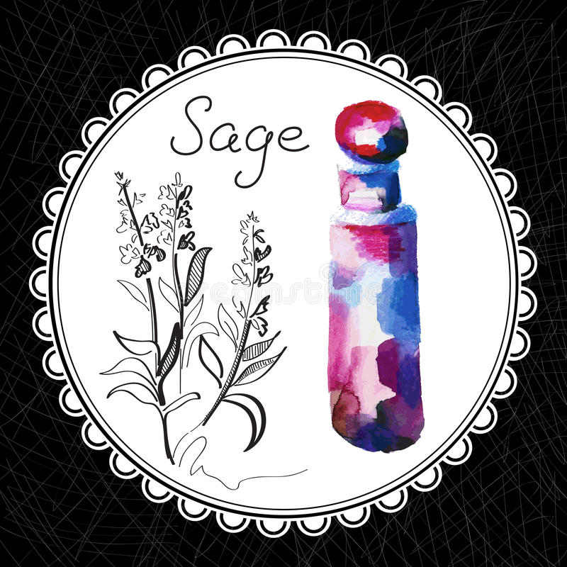 Sage. Health and Nature Collection. Aromatic sage oil (watercolor and graphic illustration vector illustration