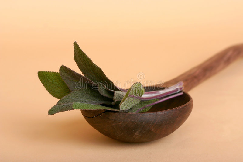 Download Sage Herb Royalty Free Stock Photography - Image: 787517