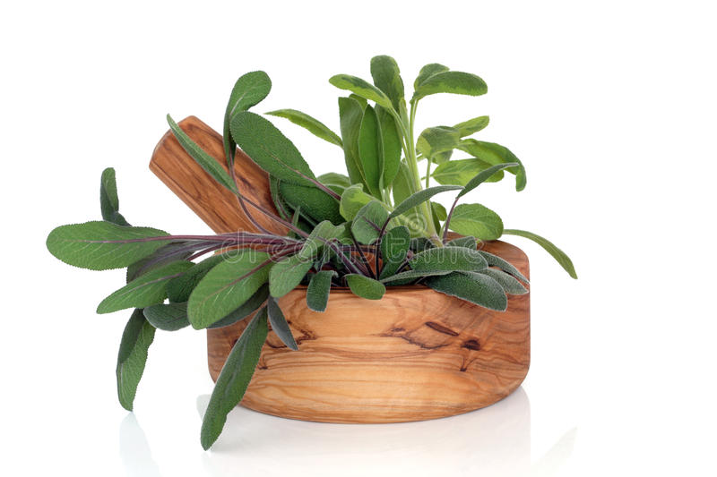 Sage Herb Leaves. Sage herb leaf varieties of purple, green and variegated, in an olive wood mortar with pestle, over white background royalty free stock image