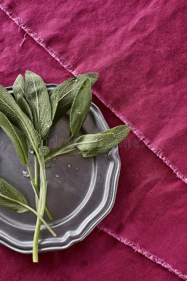 Sage Herb Picked fragante fresco de mi Herb Garden Salv orgánico fotografía de archivo