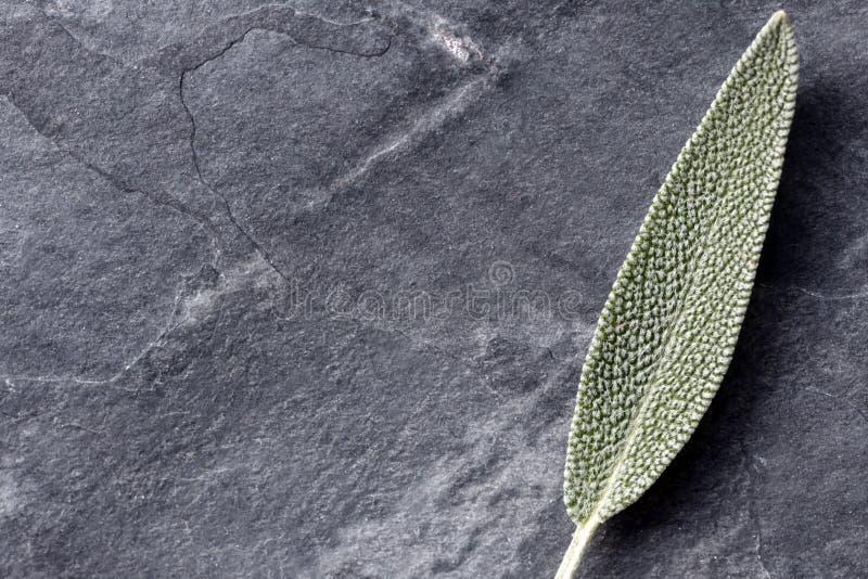 Sage Leaf sulla vista superiore dell'ardesia fotografia stock libera da diritti