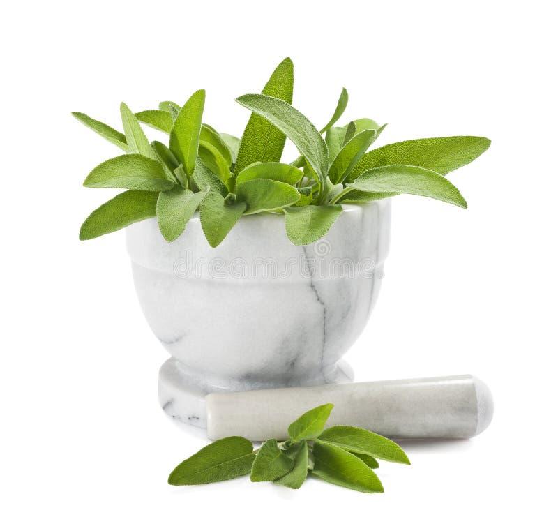 Download Sage in a mortar stock image. Image of sage, taste, spice - 25705353