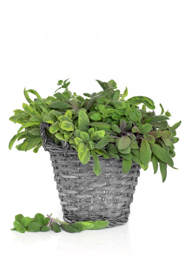 Sage and Oregano Herb Leaves. Oregano and purple and variegated sage herb leaf sprigs, in an old rustic wicker basket, isolated white background royalty free stock image