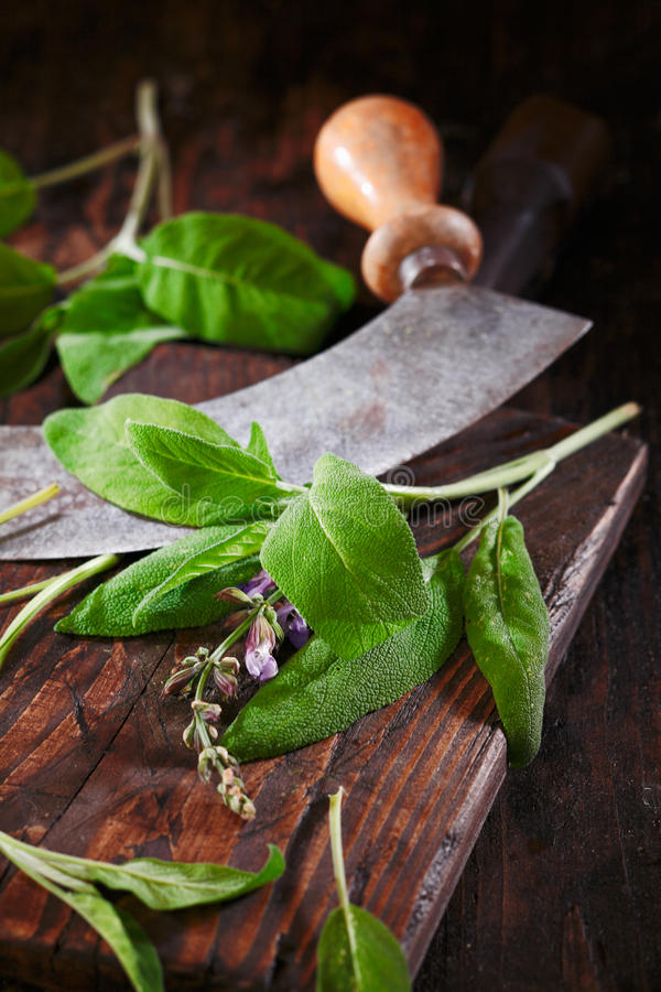 Sage On A Rustic Wooden Table Stock Photo