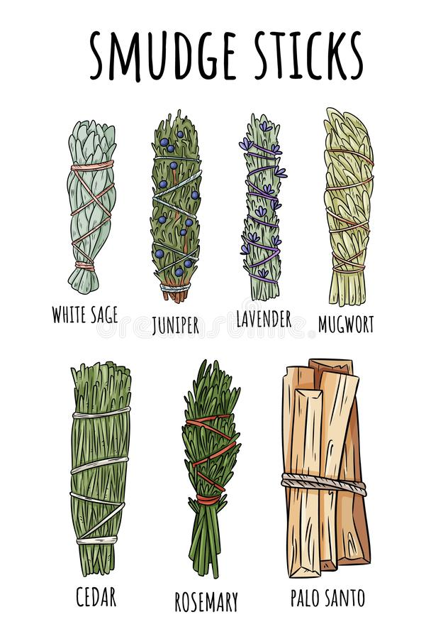Sage smudge sticks hand-drawn set of doodles. Herb bundles collection. Sage smudge sticks hand-drawn set of doodles. Herb bundles royalty free illustration