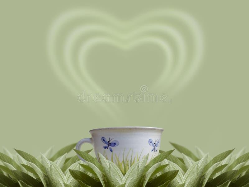 Download Sage tea stock illustration. Image of flavorful, herb - 4002225
