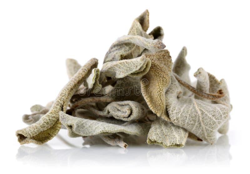 Sage Tea secado imagens de stock royalty free