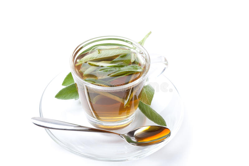 Sage tea on white background, with fresh herb inside teacup, stock photo