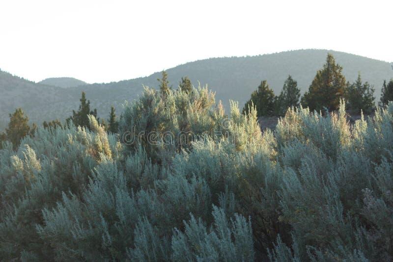 Sagebrush e zimbro perto dos Buttes de Powell fotografia de stock royalty free