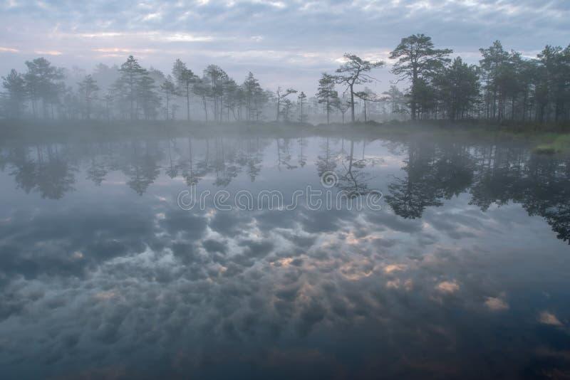 Sagolik kulör reflexion för mystisk myr och för dimmig soluppgångbredd av stigningssolen på myrsjön - sommarmorgon i Estland royaltyfri fotografi