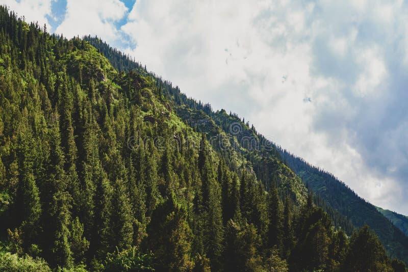 Sagolik sikt av bergen som förbluffar naturen, sommar i bergen royaltyfria bilder
