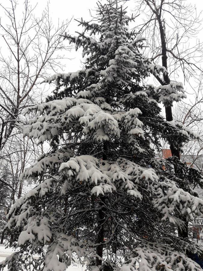 sagolik vinter Vintersaga Härligt av året arkivfoton