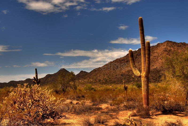 Saguaro 35 del desierto fotos de archivo libres de regalías