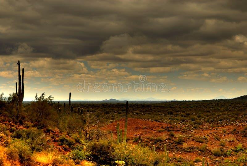 Saguaro 80 del deserto fotografia stock libera da diritti