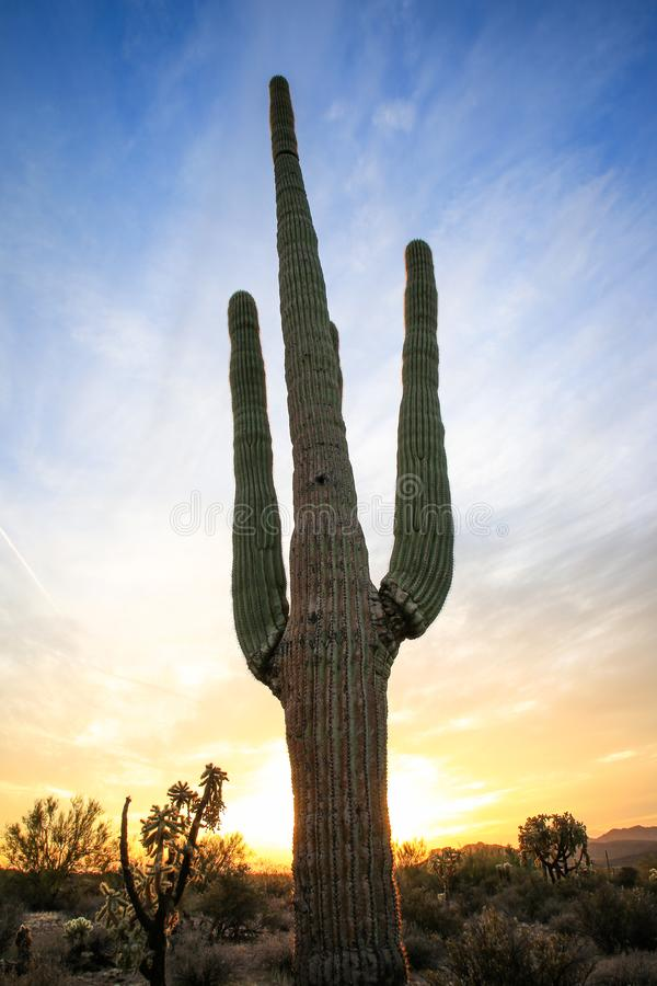 Saguaro against colorful desert sunset stock images