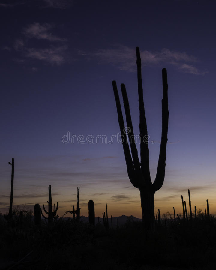 Saguaro alla sera fotografie stock