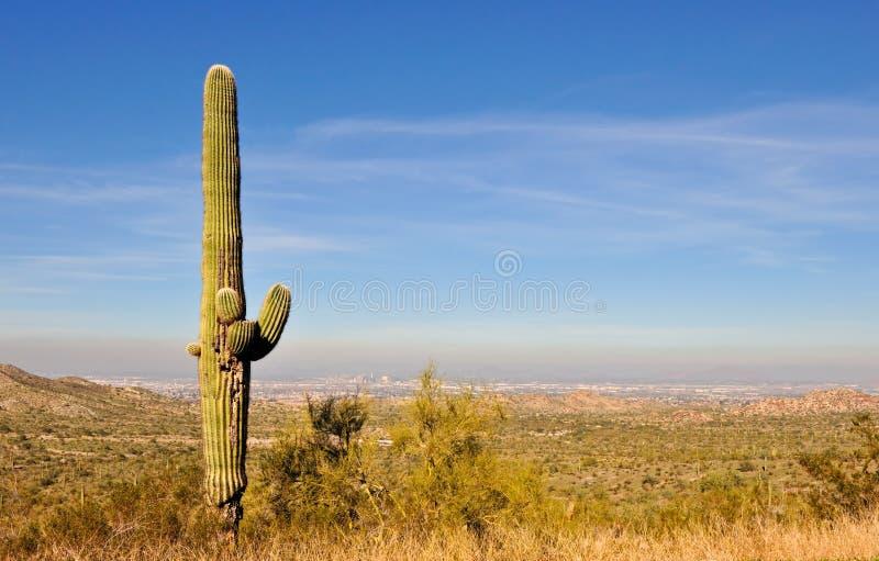 Saguaro cactus Arizona royalty free stock photo