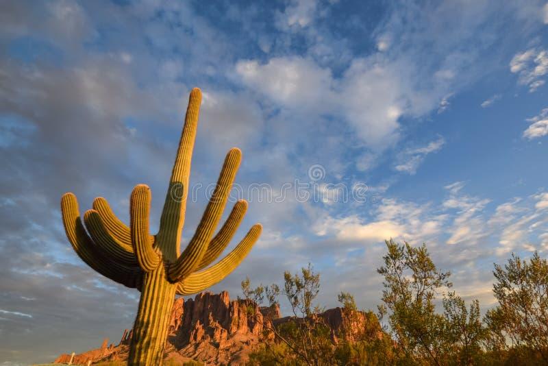 Saguaro Cactus in Arizona State Park stock photography