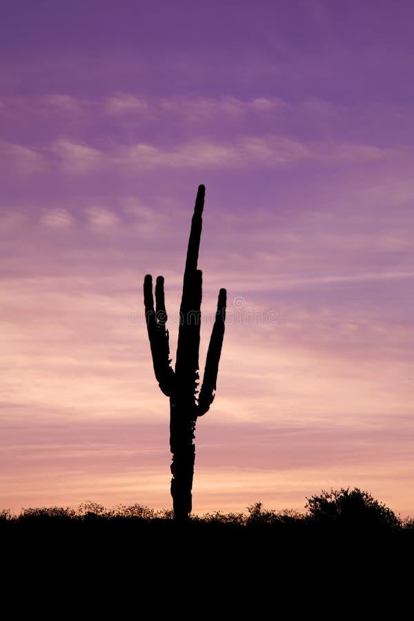 Saguaro Cactus in Sunrise