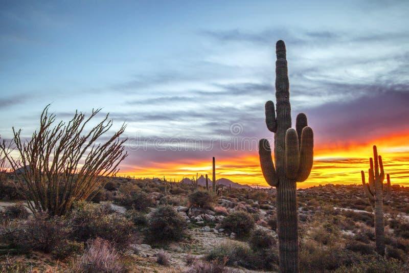 Saguaro cactus with vibrant sunset background. Big Saguaro cactus with colorful sunset background in North Scottsdale, AZ royalty free stock image